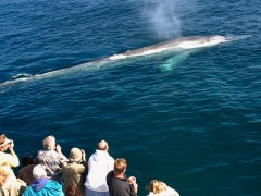 condor_express_blue_whale_surfacing