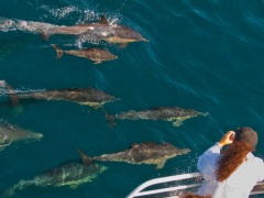 condor_express_common-dolphins-passengers