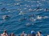 condor_express_common_dolphins_mass_with_passengers