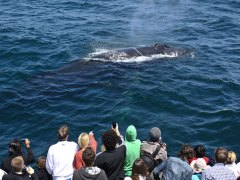 condor_express_humpback_whale_under_surface