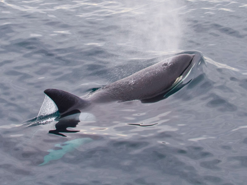 condor_express_orca_surfacing