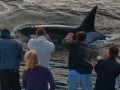 condor_express_orca_close_to_boat