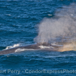 Lovin' the blue whales, humpbacks and dolphins