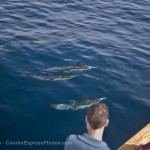 Dolphin lovers on the Condor enjoy blue water and great water clarity as long-beaked common dolphins make a friendly visit.
