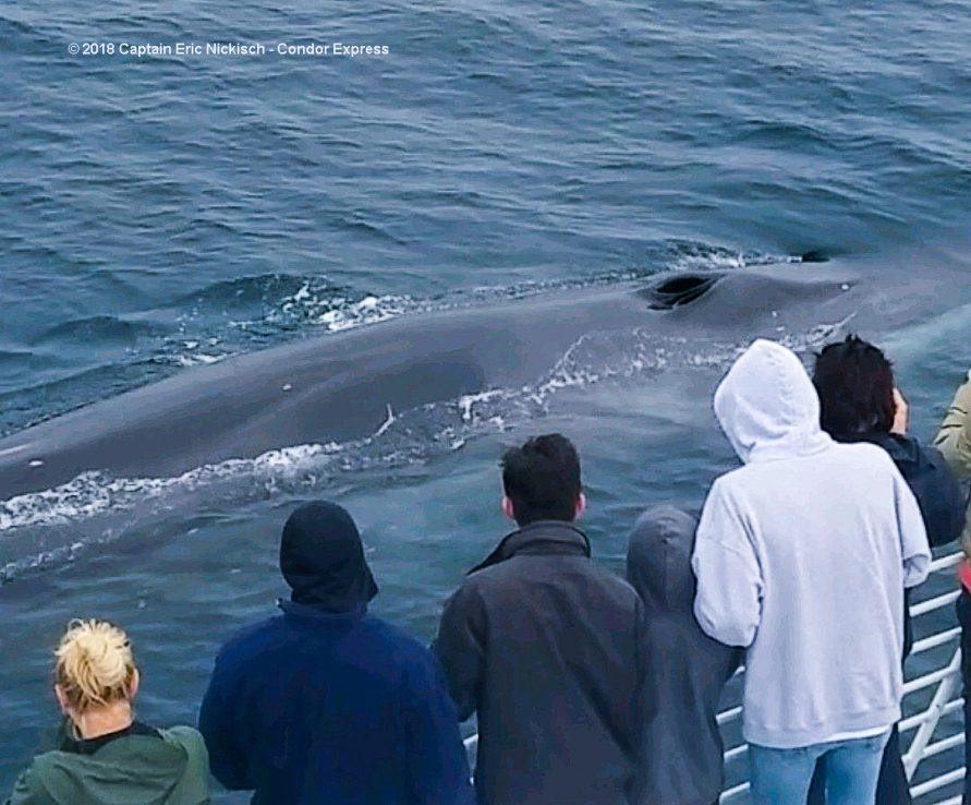 fin whales continue