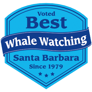 Best Whale Watching Santa Barbara