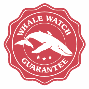 Whale Watch Guarantee